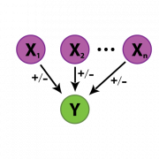 combinatorial_regulation